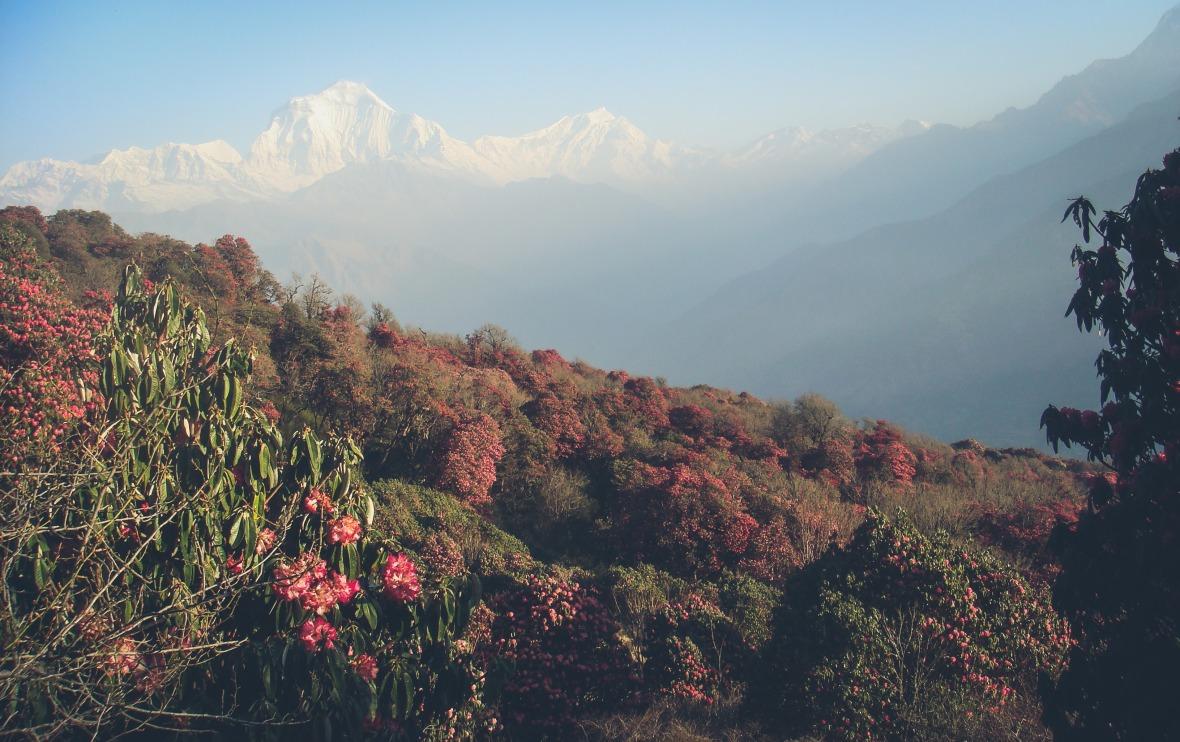 Nepal 2010-106