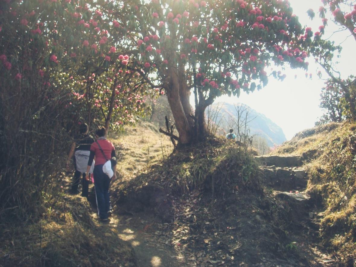 Nepal 2010-119