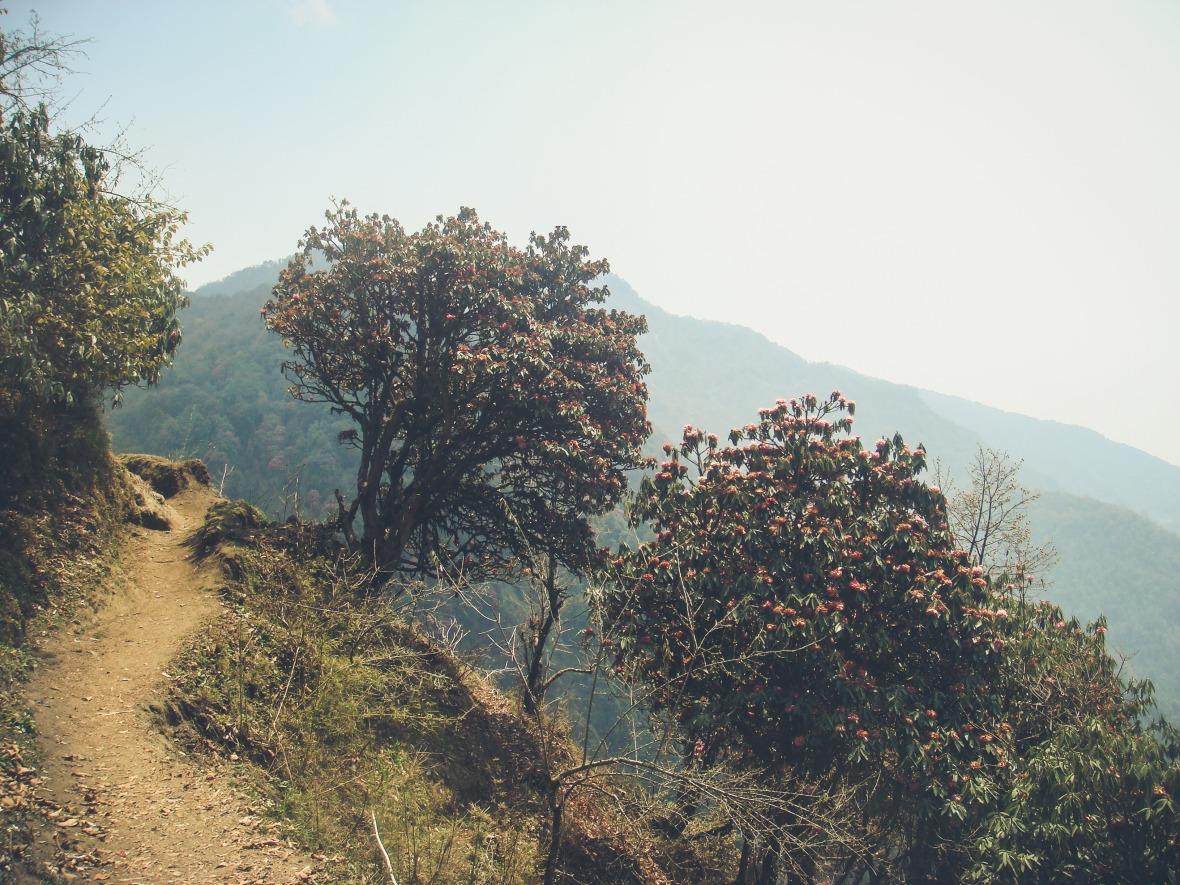 Nepal 2010-135