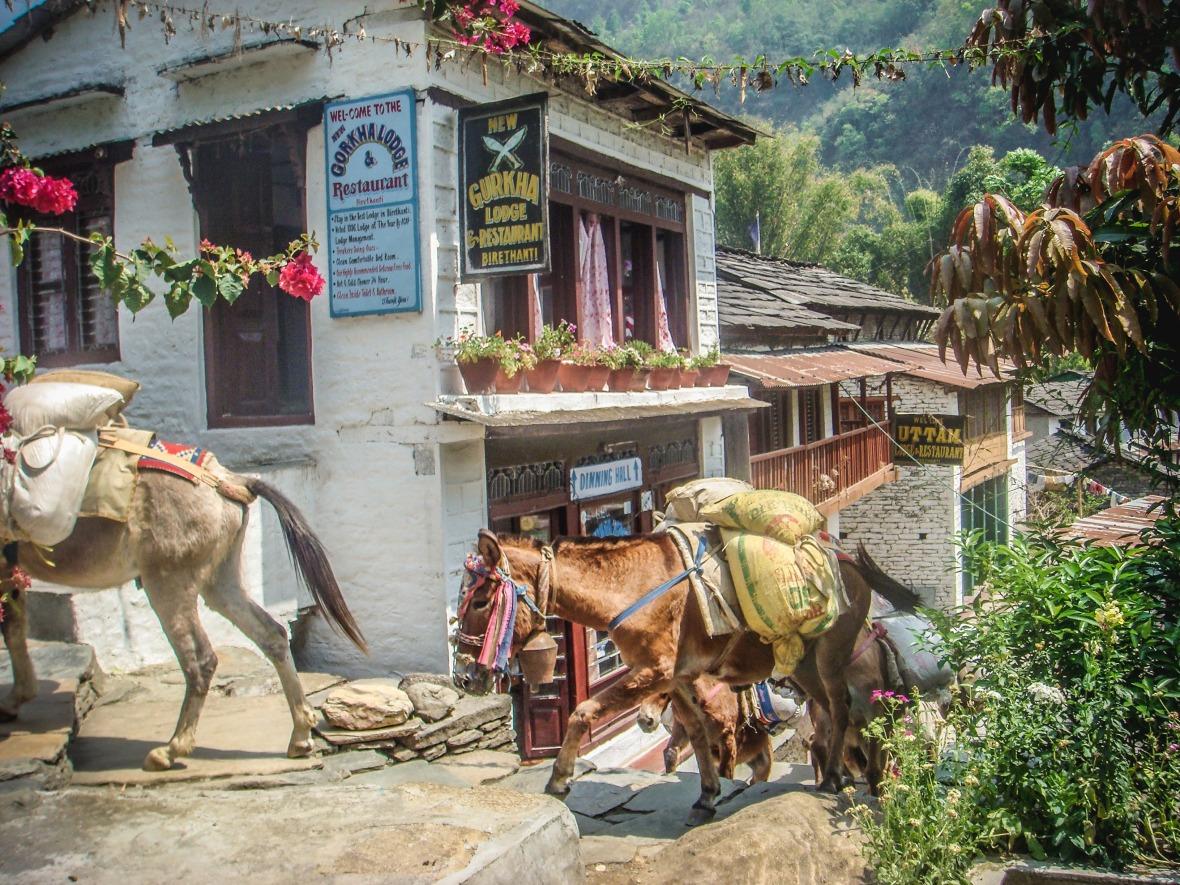 Nepal 2010-22