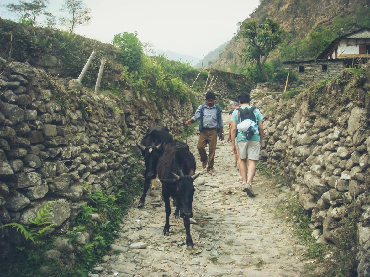Nepal 2010-30