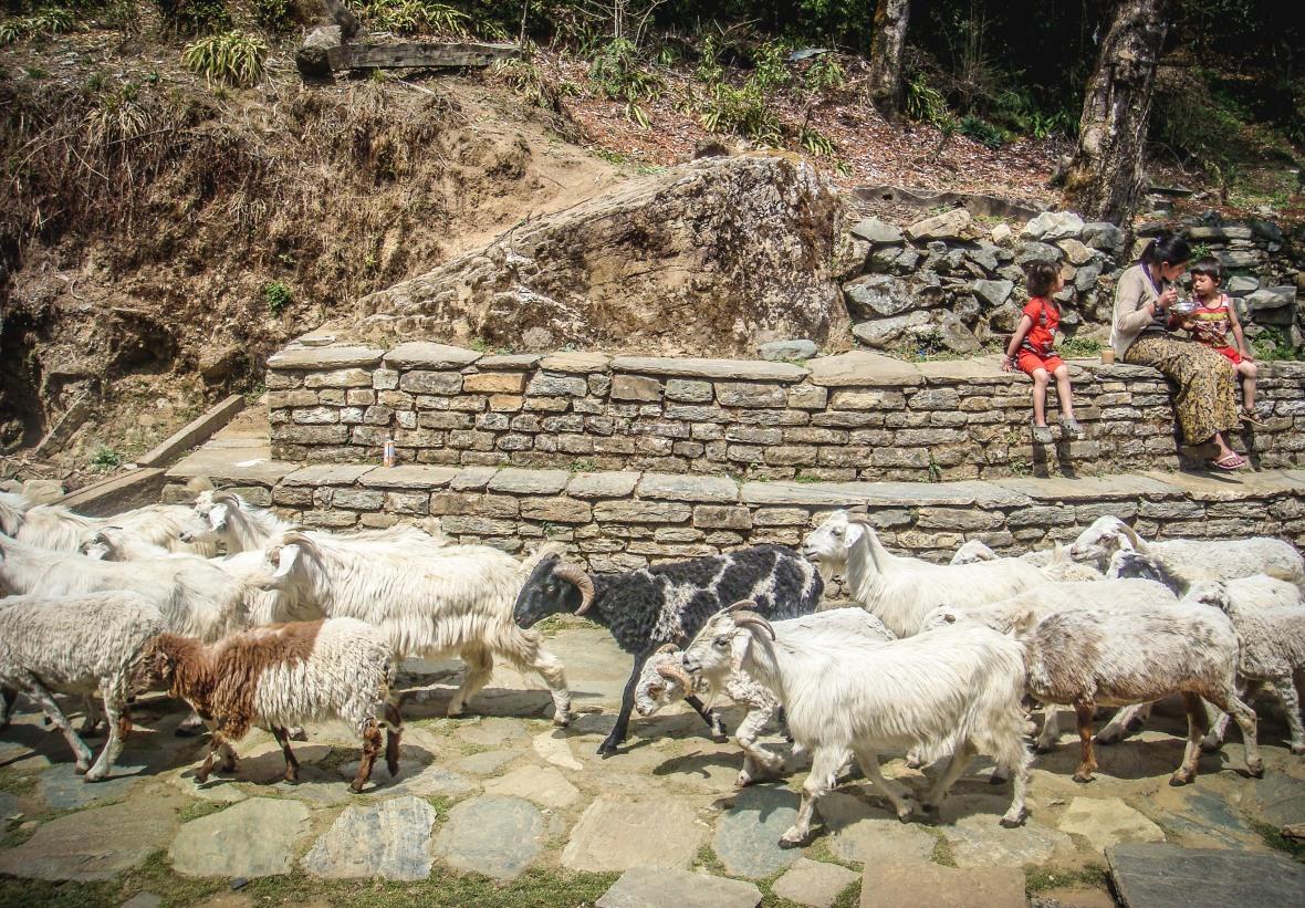 Nepal 2010-76