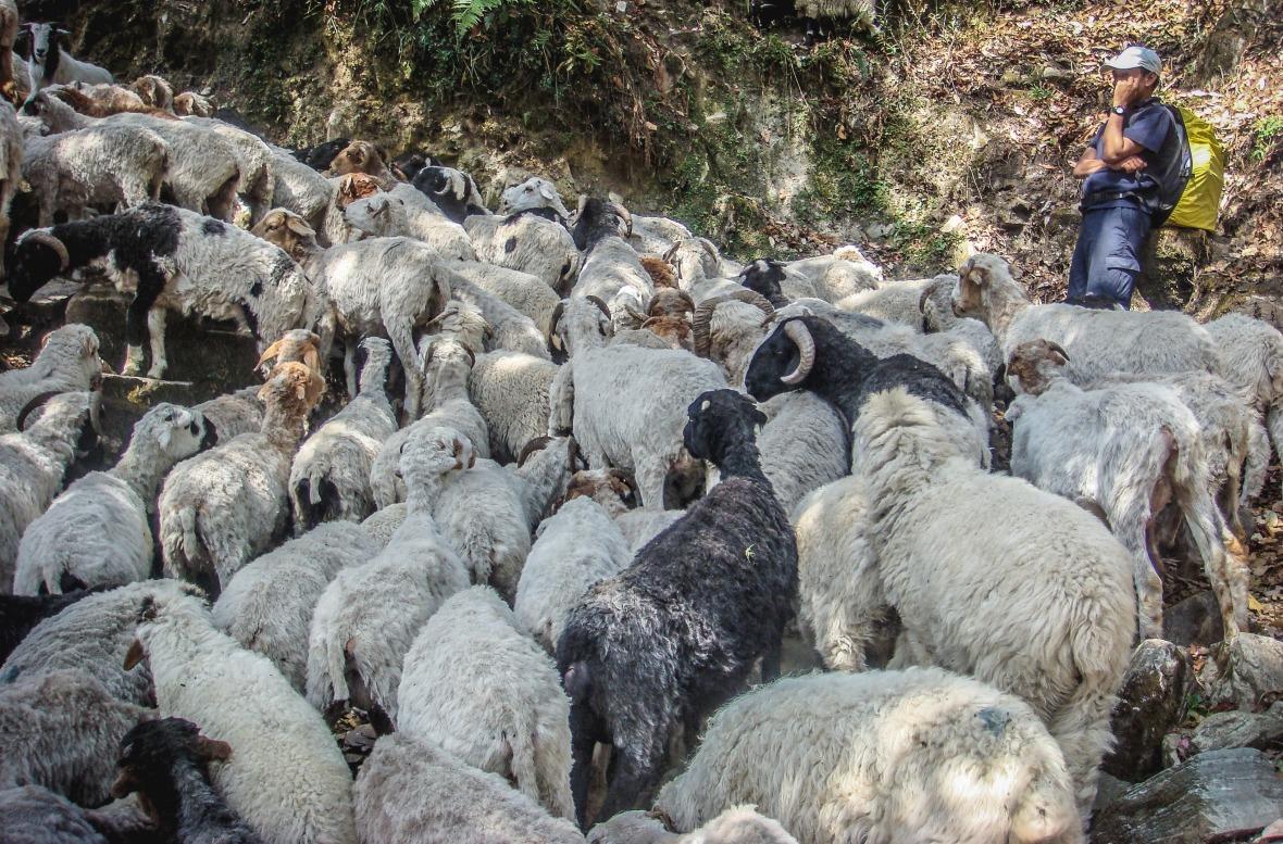 Nepal 2010-79
